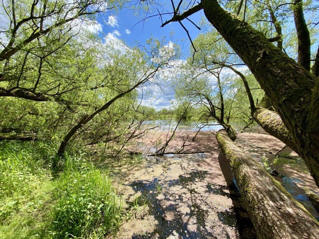 Naturidylle und Biberparadies am Hohen Elbufer zwischen Tesperhude und Lauenburg