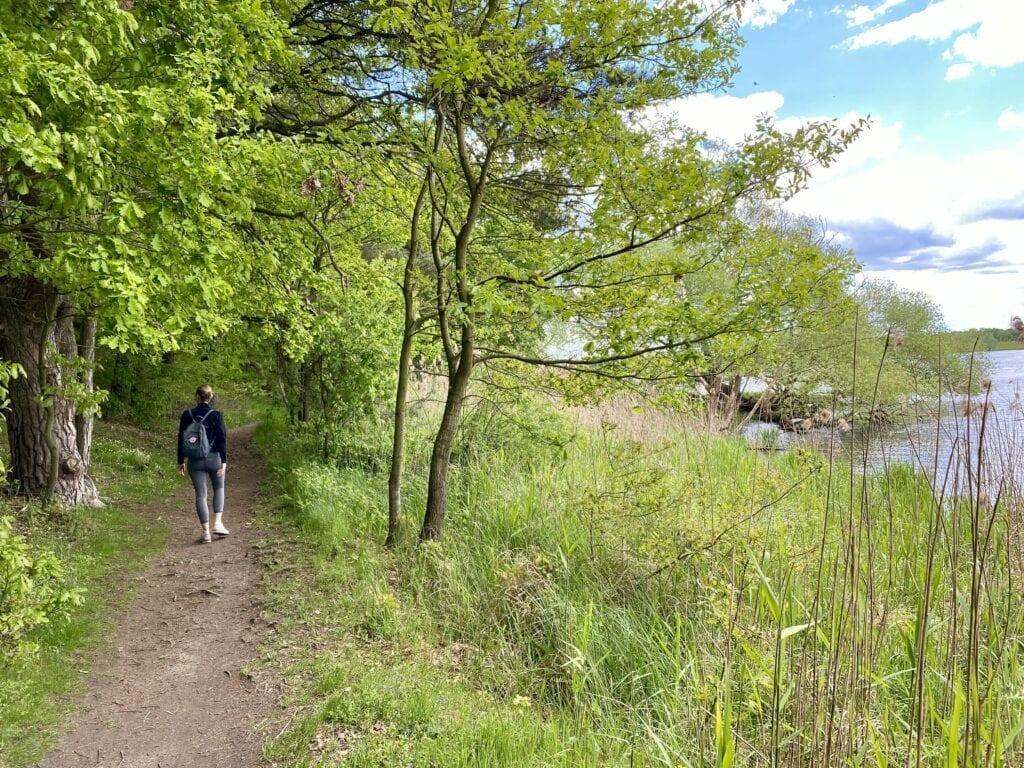 Wanderung an der Elbe am Hohen Elbufer zwischen Geesthacht und Lauenburg