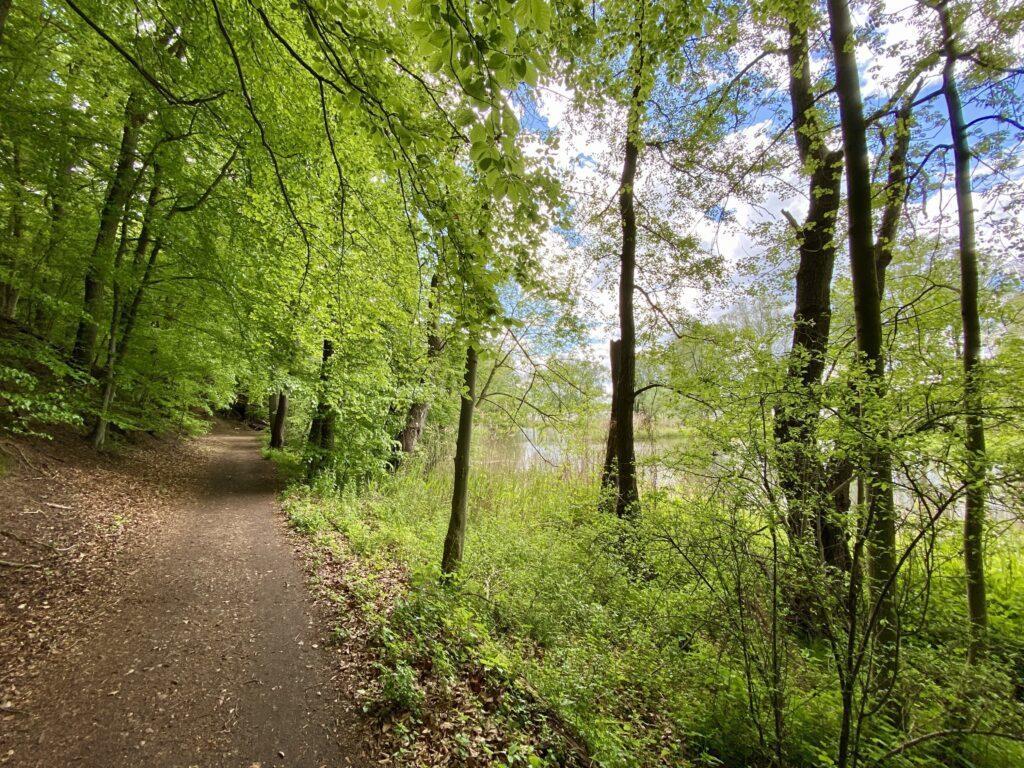 Wanderweg an der Elbe am Hohen Elbufer zwischen Geesthacht und Lauenburg
